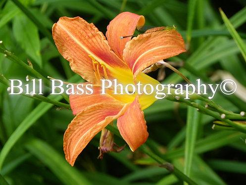 Orange Flower 5