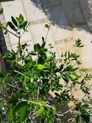 Pflanz- & Rasenarbeiten