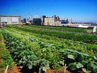 Urban farms: More than just great food