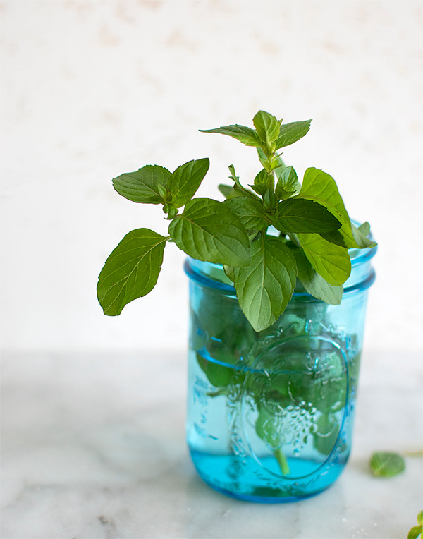 Plant of mint in a jar