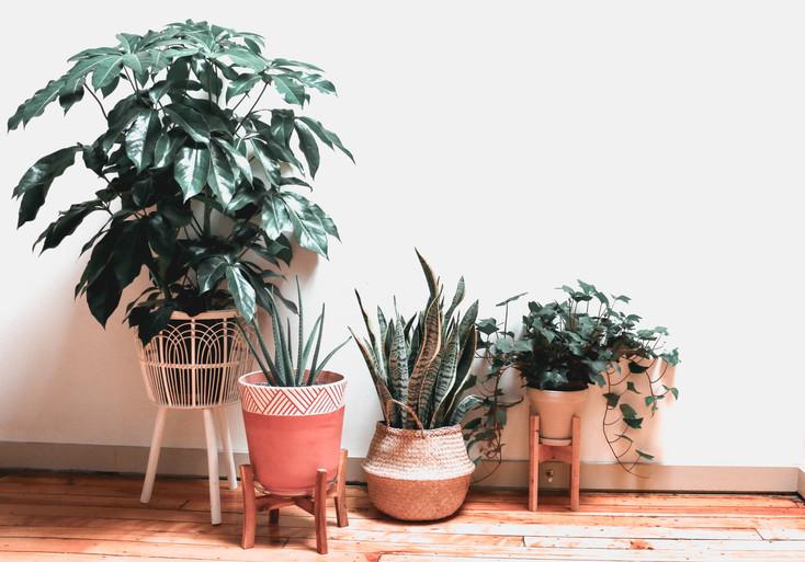 Plants on Floor.jpg