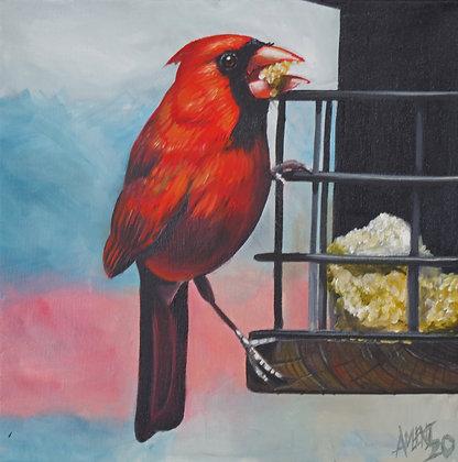 Feeder Cardinal