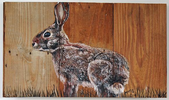Board Bunny