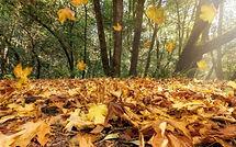 Fall Image 9.17.2020.jpg