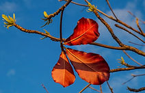 fall 1.jpg