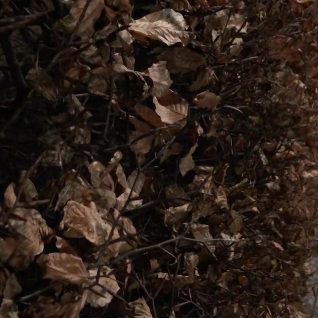 leaves.mp4
