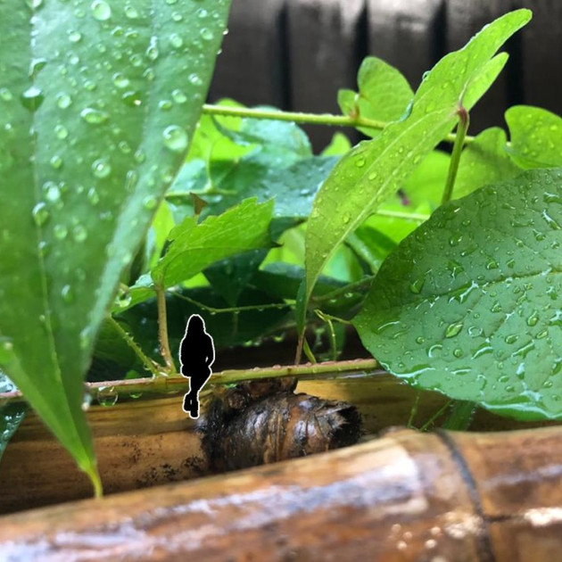 (Un)common Rain