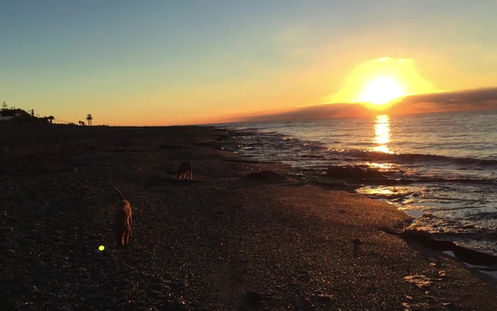 Irish Terrier im Urlaub am Meer