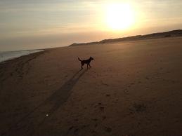 Am Meer und Strand fühlen sich Irish Terrier wohl