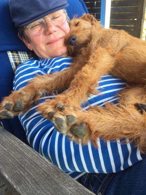 Irish Terrier im Glück