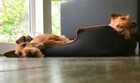 Irish Terrier genießen ein Mittagsschläfchen