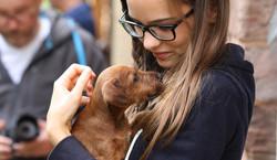 Irish Terrier Welpen lieben lange Haare