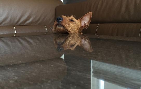 Irish Terrier sind ideale Hunde für Wohnmobilreisen