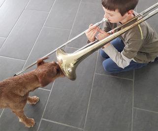 Irish Terrier sind neugierig und unerschrocken