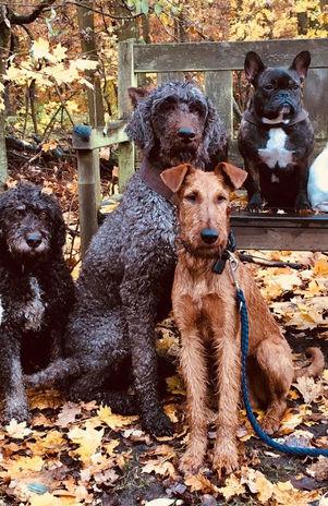 Irish kommen gut mit anderen Hunden zurecht, wenn man sie früh daran gewöhnt