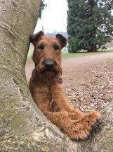 Irish Terrier sind Naturburschen und lieben Outdooraktivitäten