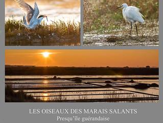 Exposition : Les oiseaux des marais salants