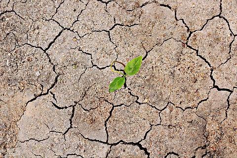 ground-soil-ibicuitinga-there-is-hope.jp