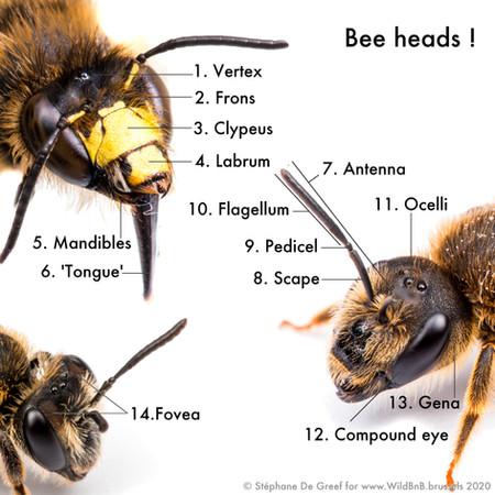 03_BeeHeaded.jpg