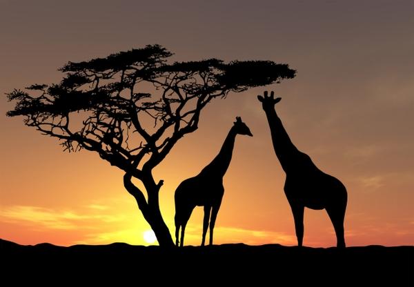 sunset nature sun trees animals wildlife