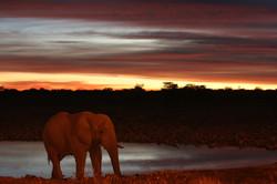 물마시러온 코끼리