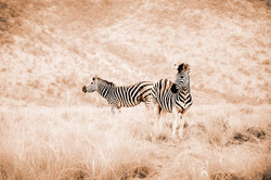 2011-south-africa-277