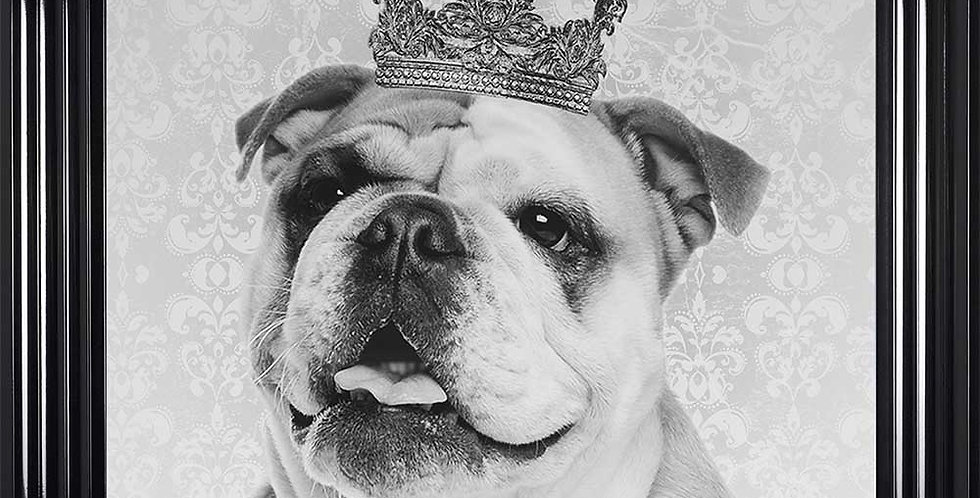 British Bulldog Prince