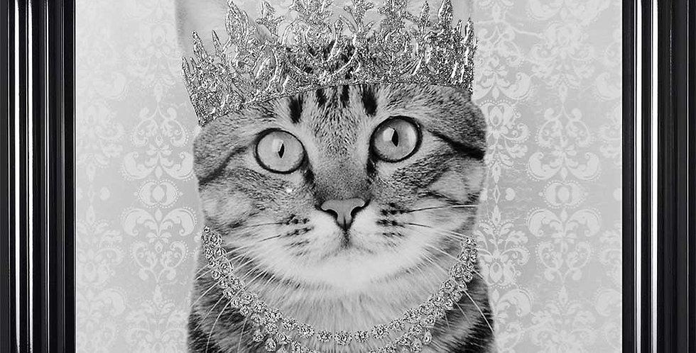 Tabby Queen