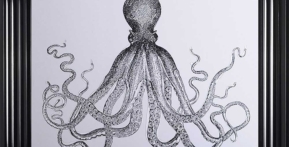 Octopus on White