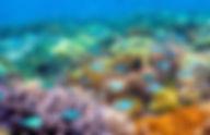 Schnorcheln auf Gilis