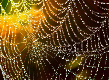 WEAVING OUR WEB WISELY