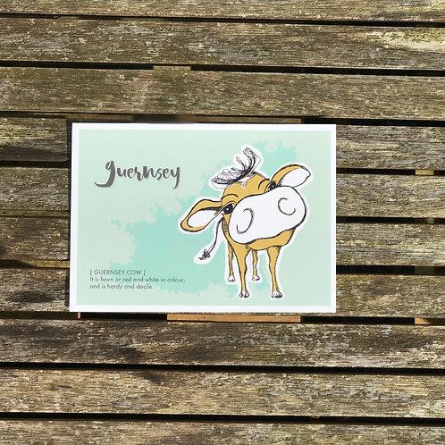 Guernsey Cow Postcard