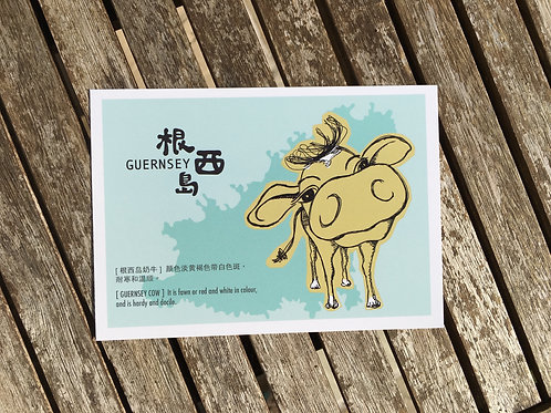 Guernsey Cow Postcard (Chinese)