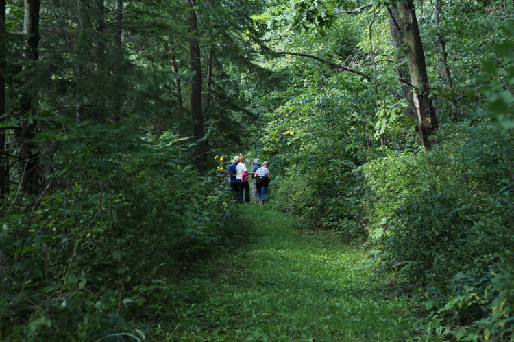 Hikers disappear in the foliage at Androne Woods.
