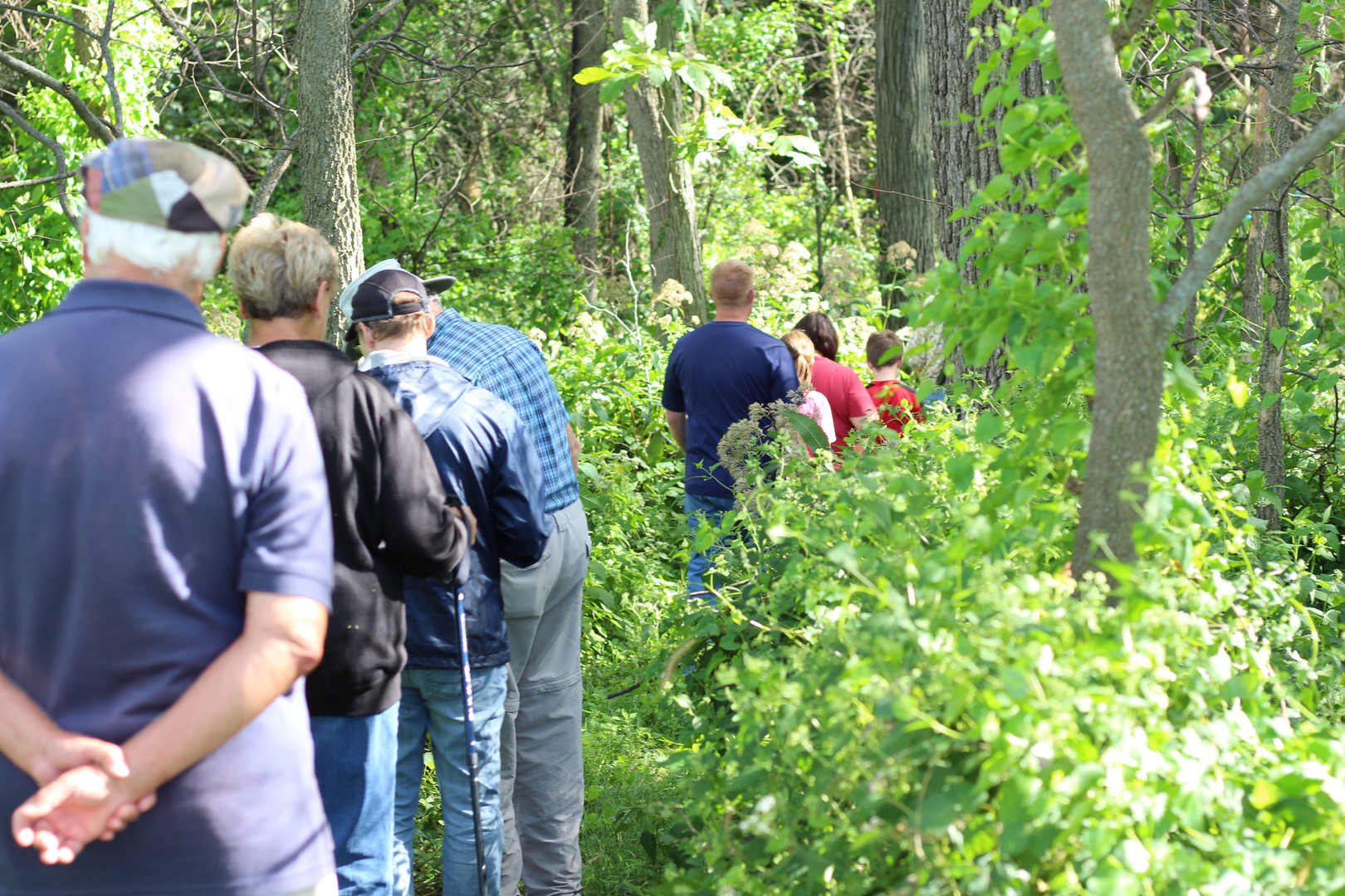 Hikers at Androne Woods pause to listen for the resident Scarlet Tananger.