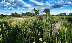 Gabower-Reilly Reserve
