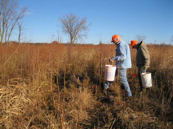 Two volunteers kill invasive brush at Spring Creek Reserve