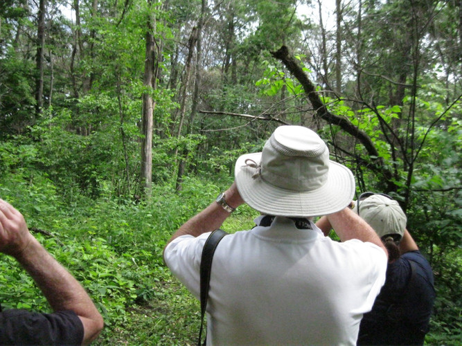 Visitors on a Guided Hike pause to look for a bird with binoculars.