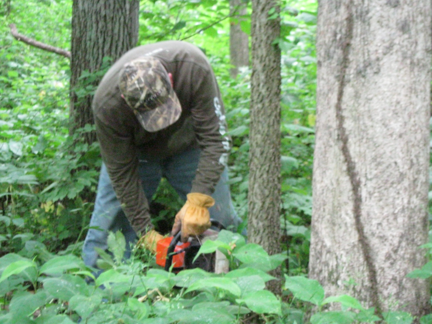 Volunteer frilling and killing invasive trees at Androne Woods.