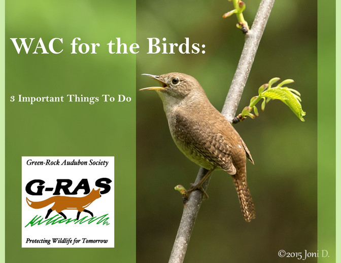 WAC for the Birds: 3 Important Things You Can Do