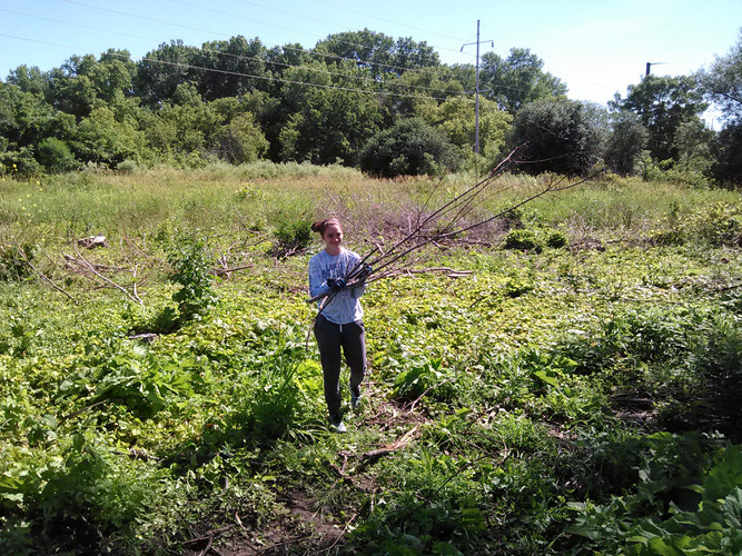 Volunteers clearing brush at the pond in Janesville.