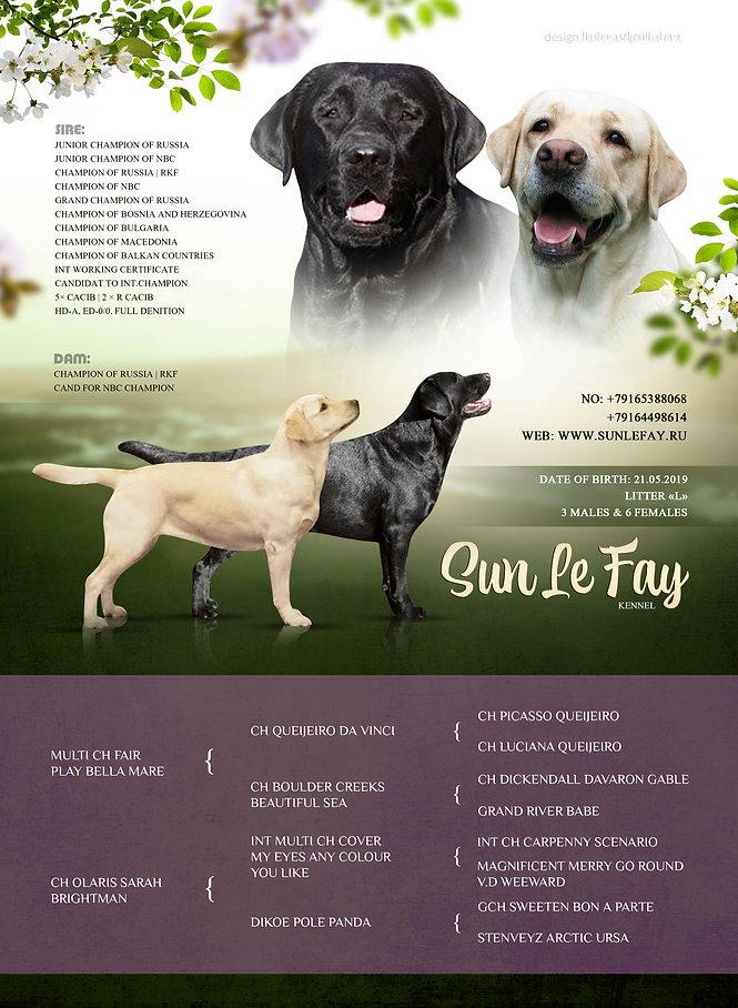 Labrador13.jpg