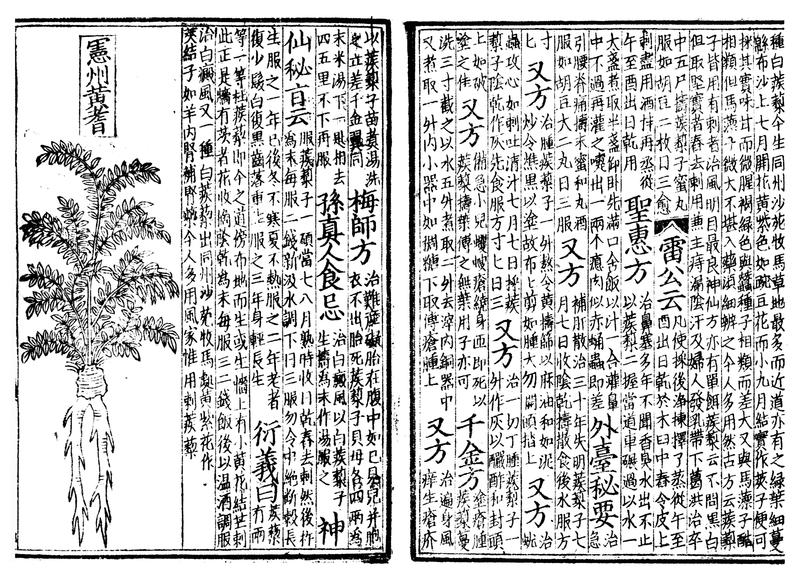 L'aloe Vera dans le Pen T'sao médecine chinoise