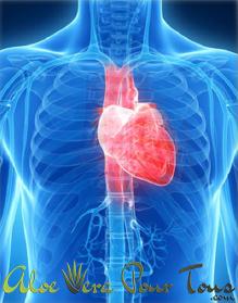 Oméga 3 pour la fonction cardiaque