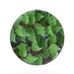Aloe Liquid Soap | Glycérine végétale