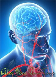Oméga 3 pour le fonctionnement du cerveau, de la vision et la protection du cœur