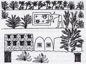 L'Aloe Vera dans la civilisation Égyptienne