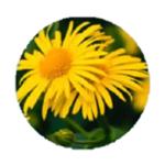Aloe Liquid Soap | Extraits de fleur d'Arnica