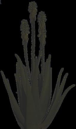Aloe Vera Beauté