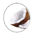 Aloe Liquid Soap | Acides gras de noix de coco